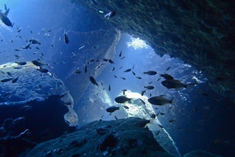 Diving in Koh Tao and Samui on Red Rock dive site through the cave